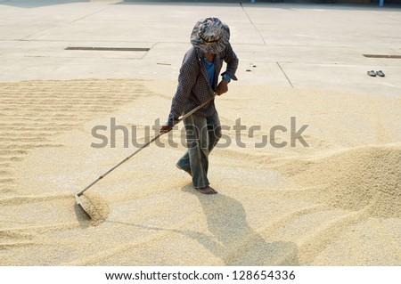 worker using harrow on rice grain field. - stock photo