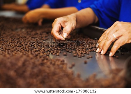 Workers choosing the beans of the best quality at coffee factory - stock photo
