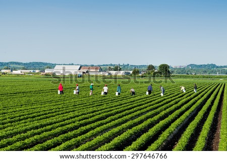 Workers in the field - stock photo