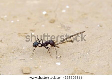 Working ant - stock photo