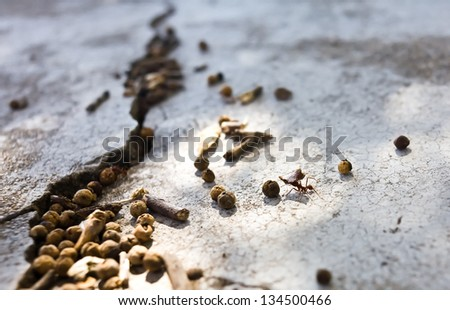 working ant on the ground
