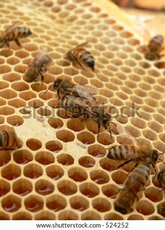 Working bees on honeycells - stock photo