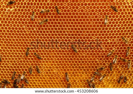 Working bees on honeycomb backgrounds insects honey - stock photo