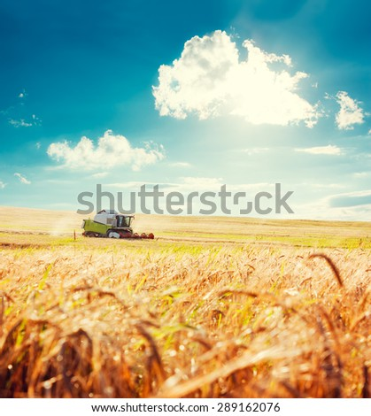 Working Harvesting Combine in the Field of Wheat. Agriculture Concept. Toned Photo with Copy Space. - stock photo