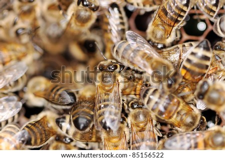 Working honeybees for healthy honey.
