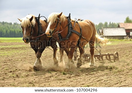 Working horses with a farm field in the background - stock photo