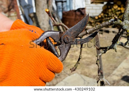 Working with cutting bush clippers in spring, pruning branch with secateurs. Early spring works. Cutting of garden trees.Young woman taking care of nature. Cutting a diseased tree branch.