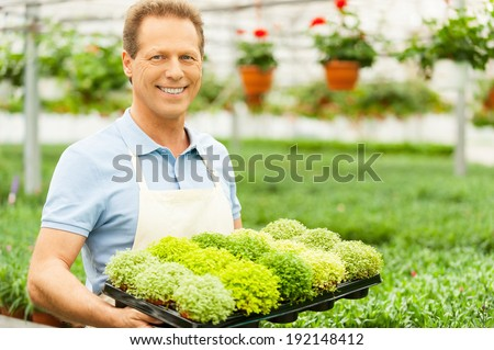 Working with flowers. Handsome mature man holding a potted plant and smiling at camera while standing in green house