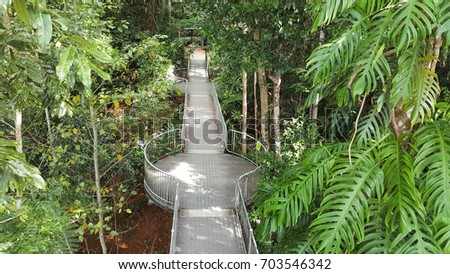 World Heritage rainforest skywalk at Mamau Australia