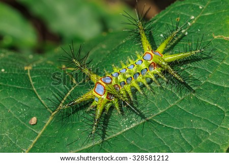Worm, caterpillars, insects, insect macro, nature,  the background blur  - stock photo