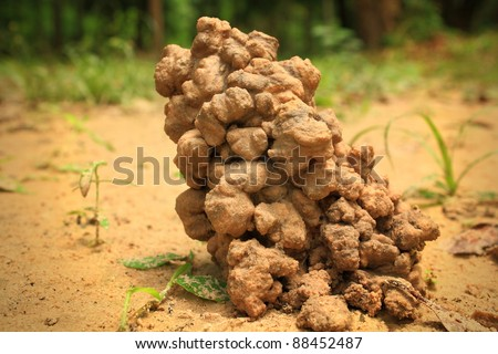 Worm nests.The worms were dug out on the floor. - stock photo