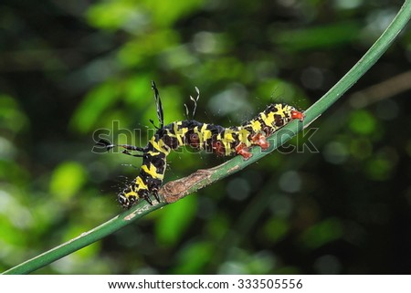 Worms, caterpillars,insects, insect, bug - stock photo