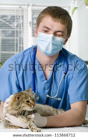 Wounded cat treated by veterinarian - stock photo