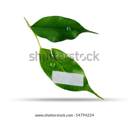 wounded green leaf on white background - stock photo