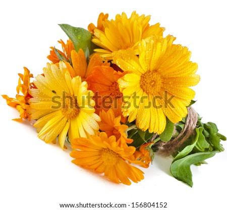 wrap bouquet orange flower of calendula Officinalis Isolated on white background - stock photo