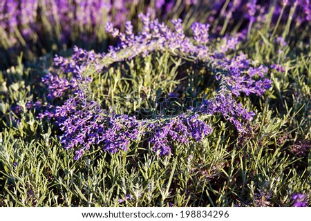 wreath of lavender