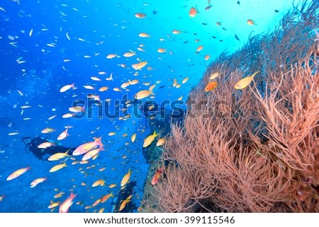 wreck and fishes - stock photo