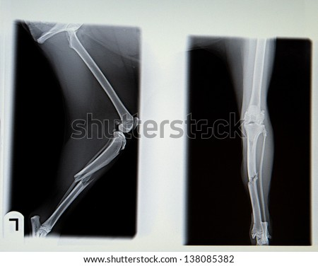 X-ray from broken leg of dog in negative - stock photo