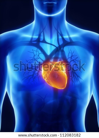 X-ray heart anatomy     **** Also as footage available in my portfolio - stock photo