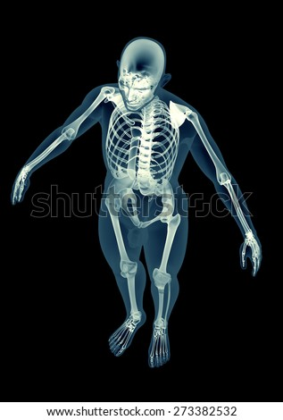 full human skeleton xray stock images, royalty-free images, Skeleton