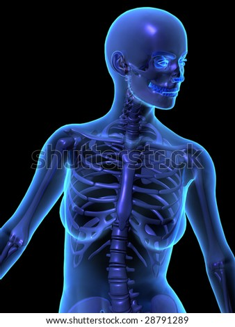 X-ray illustration of female human body and skeleton. 3D render.