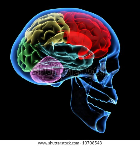 X-ray image of a human head with brain - stock photo
