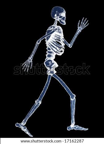 X-Ray of Full Human Skeleton Illustration on Black Background - stock photo
