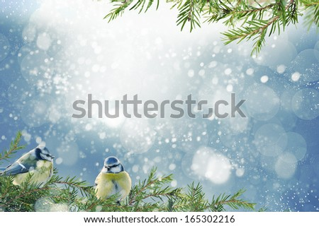 Xmas background with birds sitting on tree