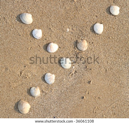 y letter symbol created from shells on a beach sand