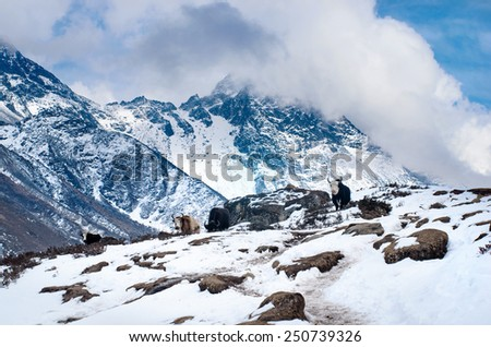 Yak in the mountains, in Sagarmatha National Park, Himalayas, Nepal - stock photo