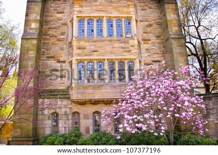 Yale University Victorian Building Windows Magnolia, Spring, New Haven Connecticut - stock photo