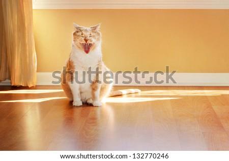 Yawning Cat - stock photo