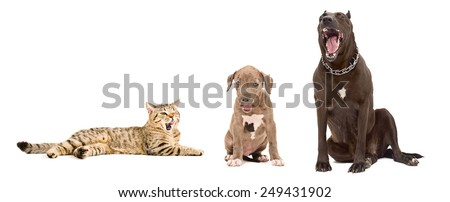 Yawning dogs and cat together isolated on white background - stock photo