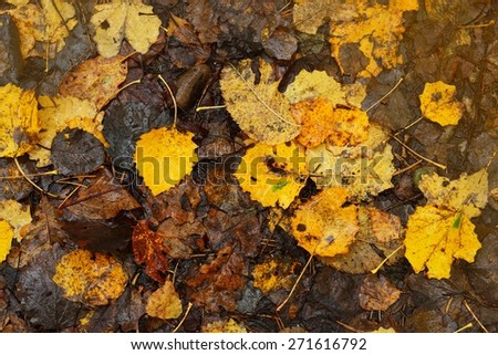 yeallow Autumn leaves pattern on the ground - stock photo