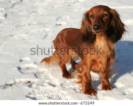 Year of a fiery dog - stock photo