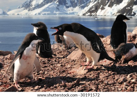 Yelling at its chick - stock photo