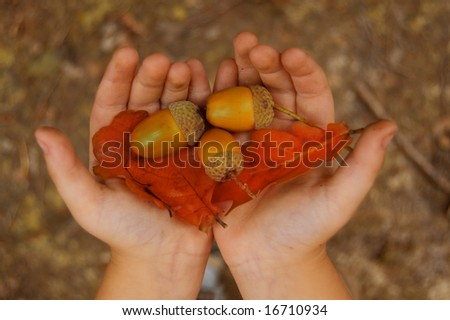 yellow acorn in child hands - stock photo