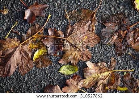 Yellow and gold leafs, autumn background - stock photo
