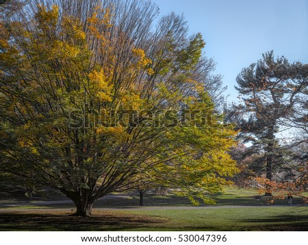Yellow and green tree on a sunny autumn day in New York botanical garden, Bronx