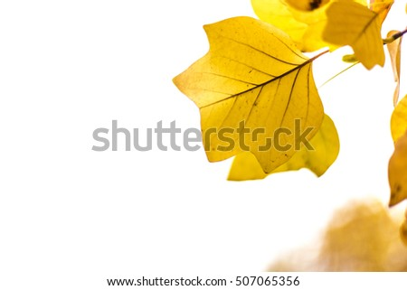 Yellow and orange fall leaves on a branch tree