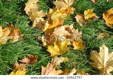 Yellow and orange fall leaves on green grass background - stock photo