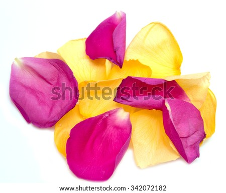 yellow and pink rose petals on a white background