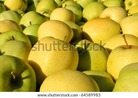 yellow and red apples in the box - stock photo