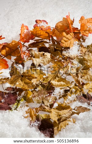 Yellow and red dry autumn leaves and snow crystals on a studio background