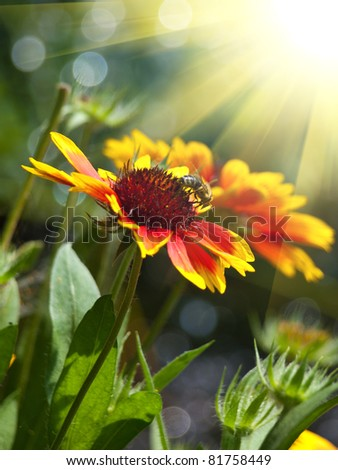 yellow and red flower - stock photo