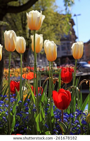 Yellow and red tulips with multicolored garden flowers on background,vertical image, selective focus  - stock photo