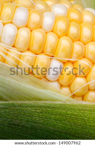 Yellow and white bi color sweet corn is surrounded by green husks and strands of silk. - stock photo