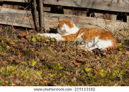 Yellow and white big cat laying in sunlight on autumn leaves - stock photo