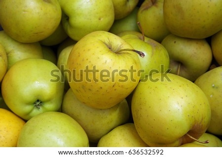 Yellow apples bunched for market closeup view from above