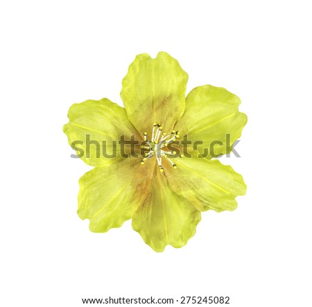 Yellow artifical flower isolated on white with clipping path - stock photo